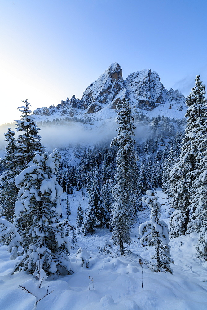 The high peak of Sass De Putia frames the snowy woods at dawn Passo Delle Erbe Funes Valley South Tyrol Italy Europe