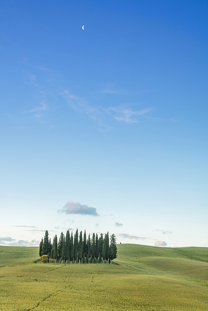 Dusk frames the cypresses on the gentle green hills of Val d'Orcia, UNESCO World Heritage Site, Province of Siena, Tuscany, Italy, Europe