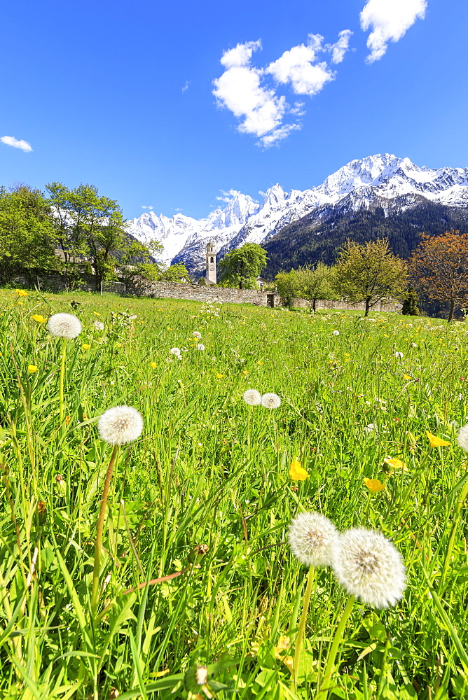 Green meadows frame the church of Soglio in spring, Maloja, Bregaglia Valley, Engadine, canton of Graubunden, Switzerland, Europe - 1179-2274
