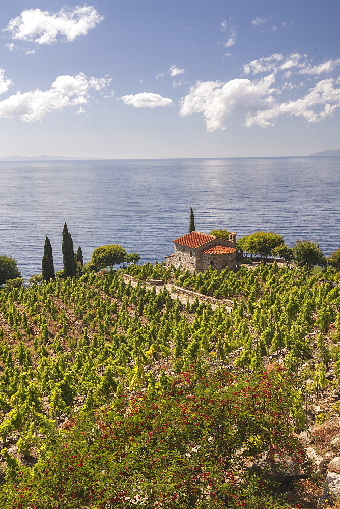Farmhouse and cultivated fields overlooking the sea, Pomonte, Marciana, Elba Island, Livorno Province, Tuscany, Italy