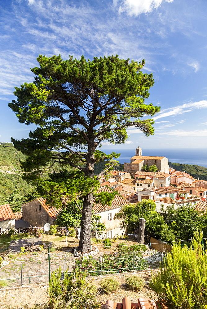 Village of Poggio on the hills of Monte Capanne, Marciana, Elba Island, Livorno Province, Tuscany, Italy - 1179-2658