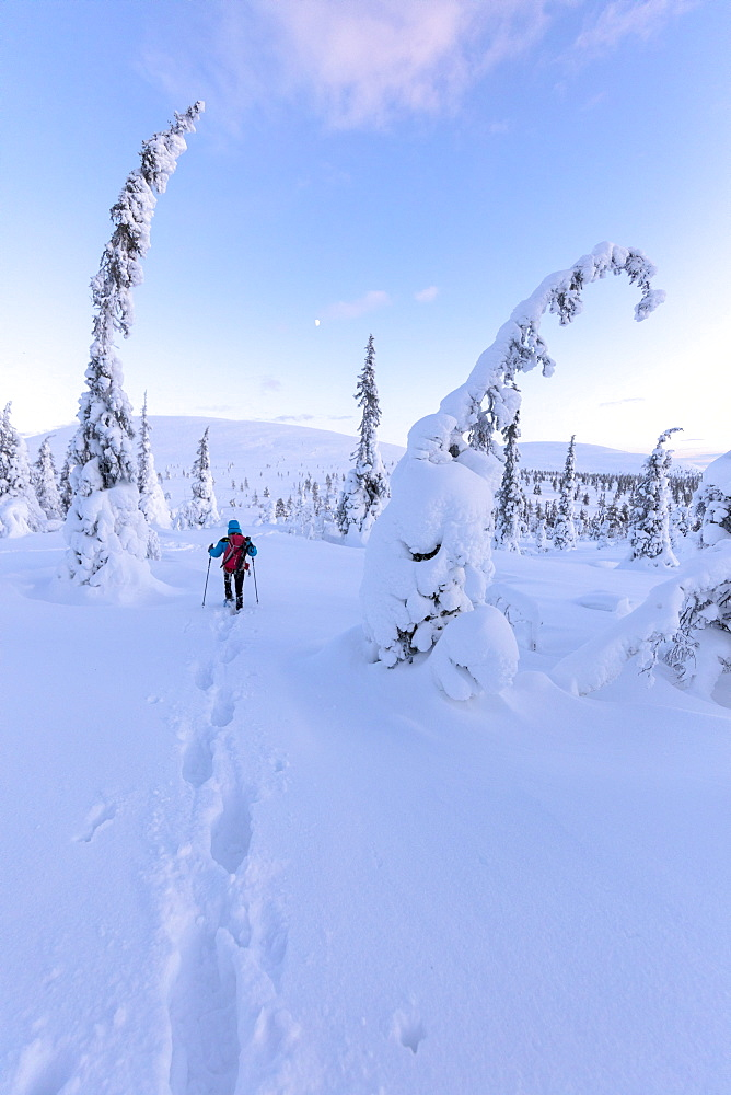 Hiker on snowshoes, Pallas-Yllastunturi National Park, Muonio, Lapland, Finland, Europe