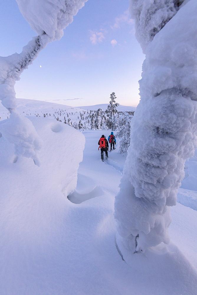 Hikers on snowshoes, Pallas-Yllastunturi National Park, Muonio, Lapland, Finland, Europe