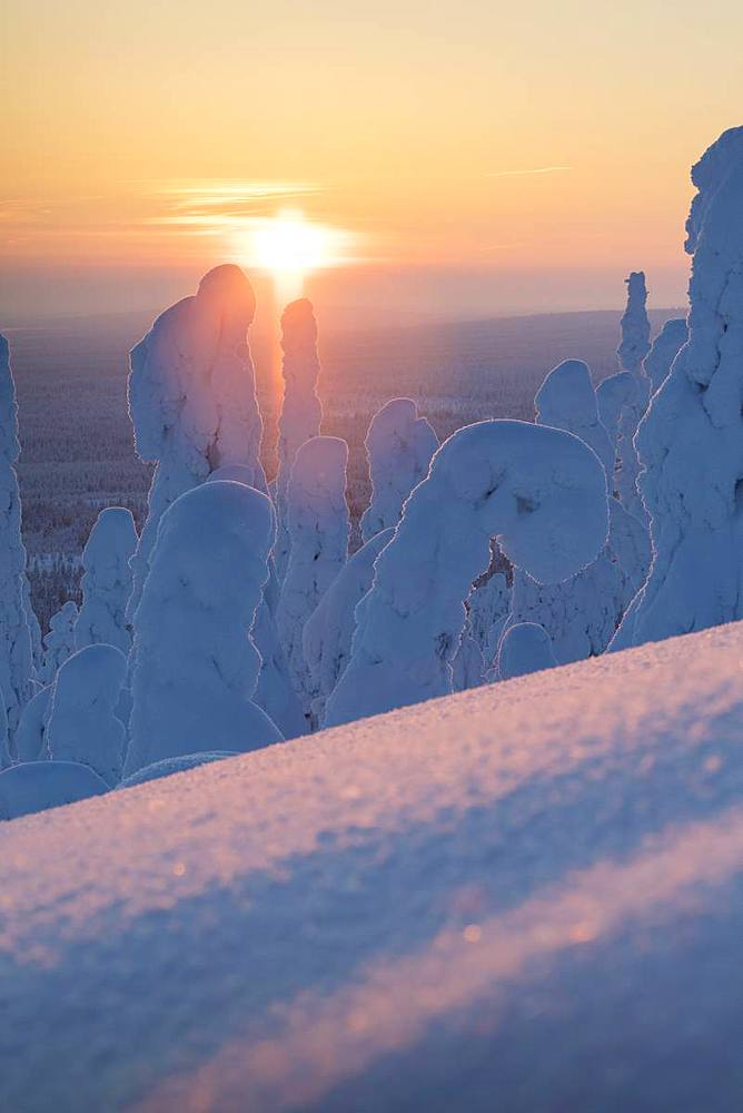 Sunset on the icy forest, Riisitunturi National Park, Posio, Lapland, Finland, Europe