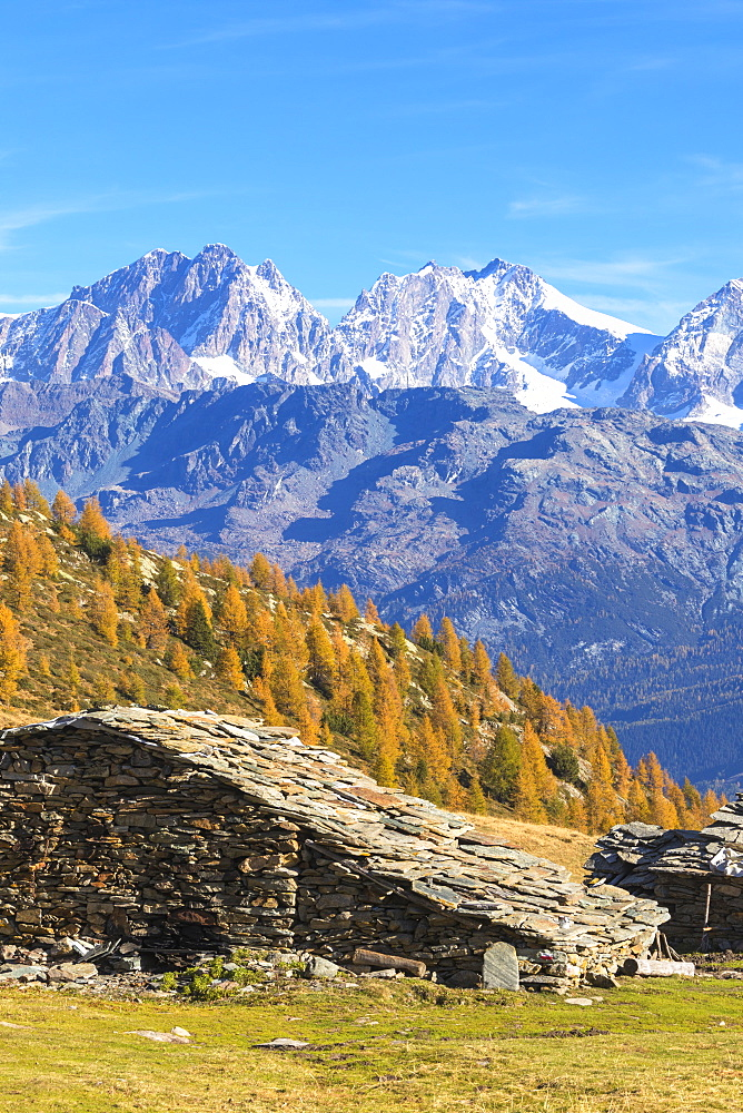 Stone hut and colorful woods in autumn with Bernina Group on background, Alpe Arcoglio Valmalenco, Valtellina, Lombardy, Italy, Europe