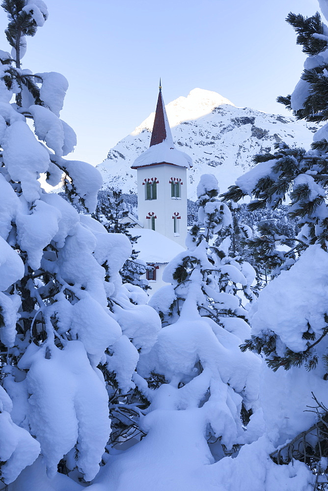 Snow covered trees around Chiesa Bianca, Maloja, Bregaglia Valley, Engadine, Canton of Graubunden, Switzerland, Europe