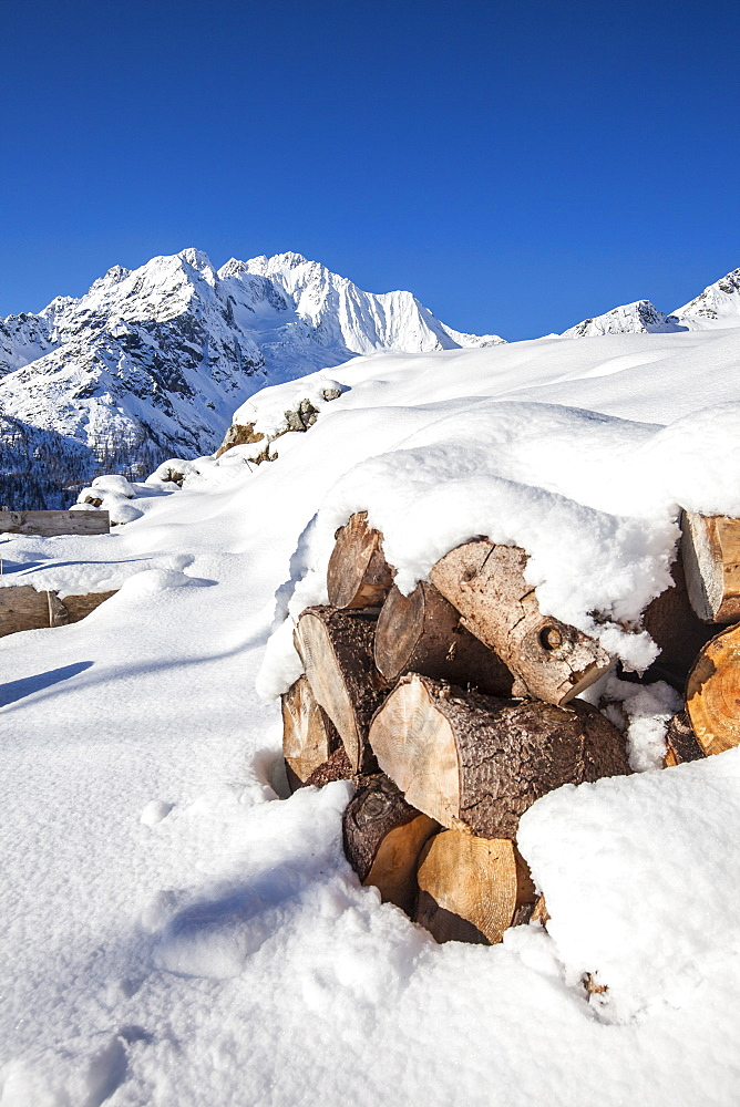 Firewood covered with snow with Monte Disgrazia in the background, Alpe dell'Oro, Valmalenco, Valtellina, Lombardy, Italy, Europe