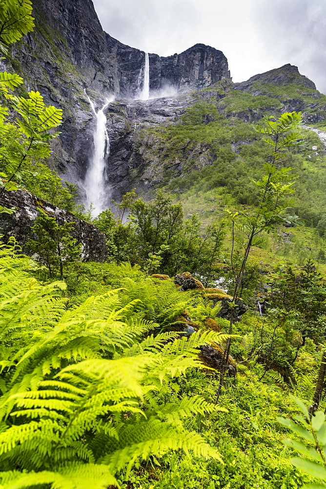 Green ferns along the course of majestic Mardalsfossen waterfall, Eikesdalen, Nesset municipality, More og Romsdal county, Norway, Scandinavia, Europe - 1179-4061