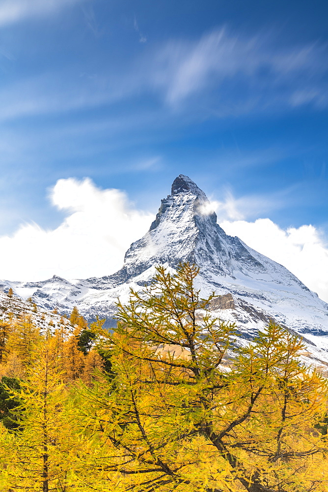 Yellow larch trees framing Matterhorn in autumn, Pennine Alps, Zermatt, canton of Valais, Swiss Alps, Switzerland, Europe