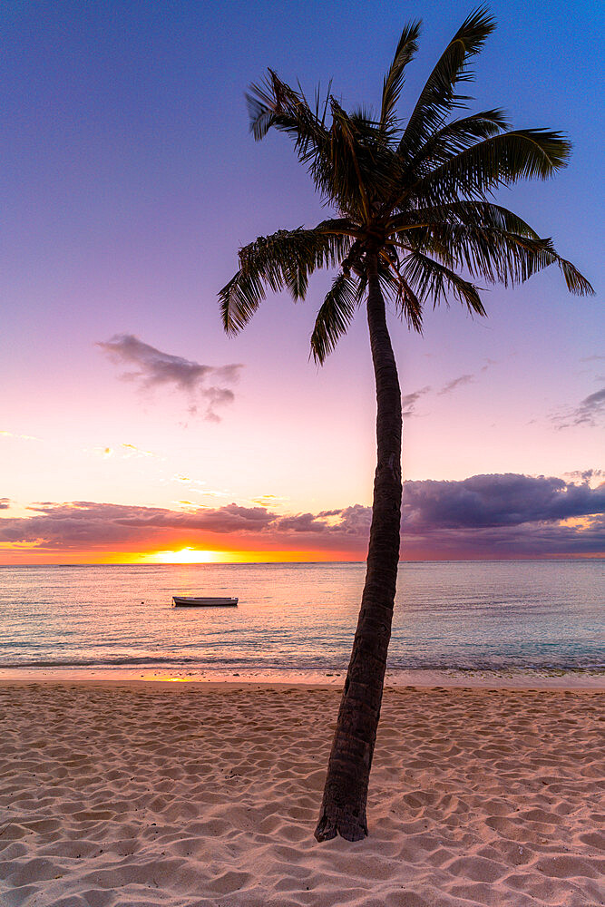 Palm tree on tropical beach during sunset, Le Morne Brabant, Black River district, Indian Ocean, Mauritius