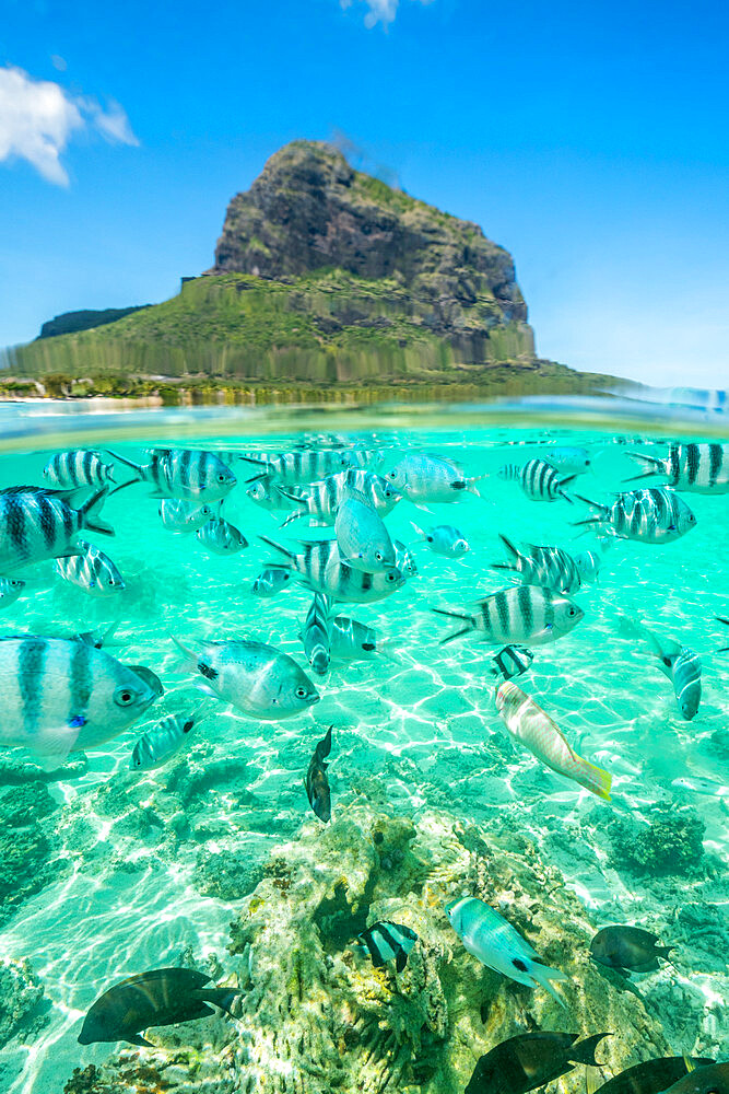 Tropical fish under the waves along the tropical coral reef, Le Morne Brabant, Black River district, Indian Ocean, Mauritius
