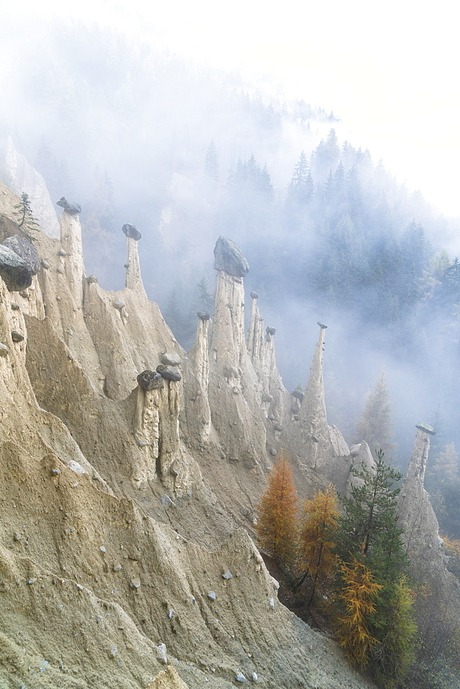 Colorful trees on rocks of the Earth Pyramids in autumn, Perca/Percha, province of Bolzano, South Tyrol, Italy