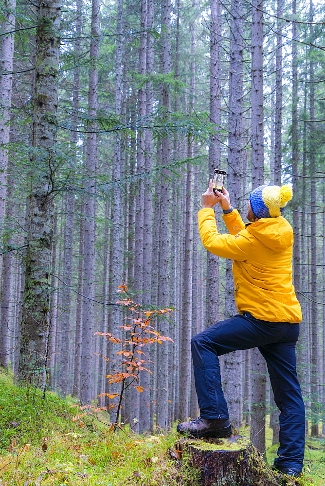 Man photographing trees with mobile phone, Somadida Reserve, Dolomites, Auronzo di Cadore, Veneto, Italy, Europe