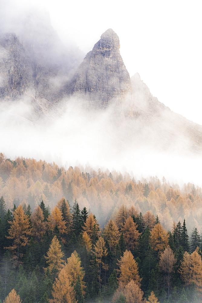 Fog over the orange colored larch tree woods in autumn, Misurina, Dolomites, Auronzo di Cadore, Belluno province, Veneto, Italy, Europe