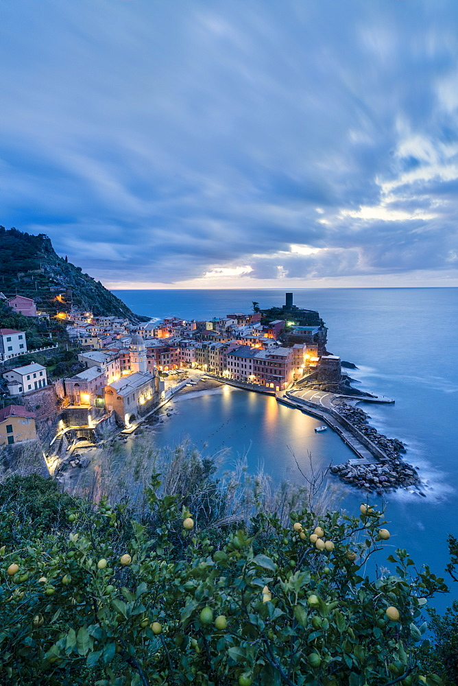 Lemon tree on hills above Vernazza at dusk, Cinque Terre, La Spezia province, Liguria, Italy
