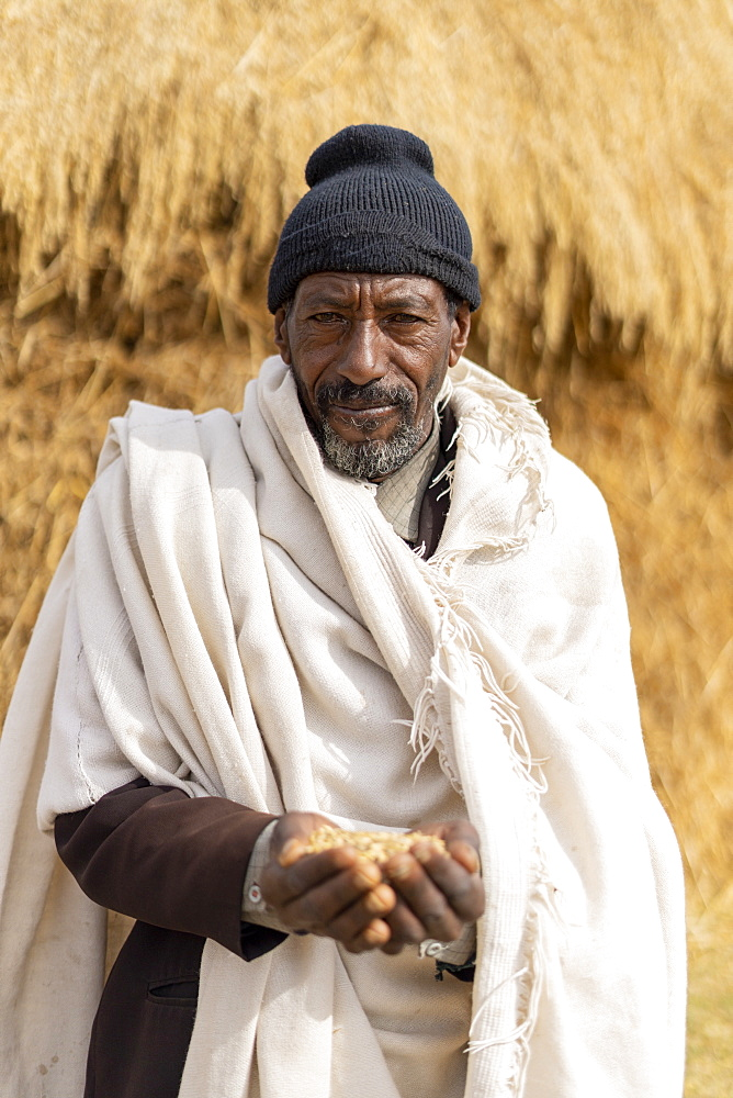 Portrait of senior man holding wheat in hands, Wollo Province, Amhara Region, Ethiopia, Africa