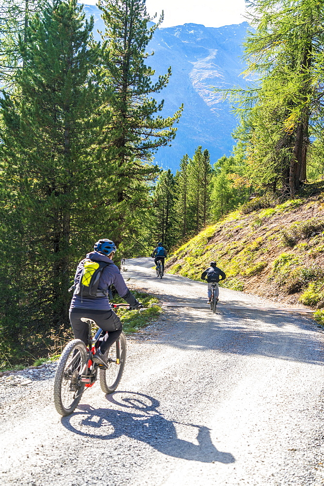 Mountain bikers on downhill path crossing woods towards Celerina, canton of Graubunden, Engadine, Switzerland