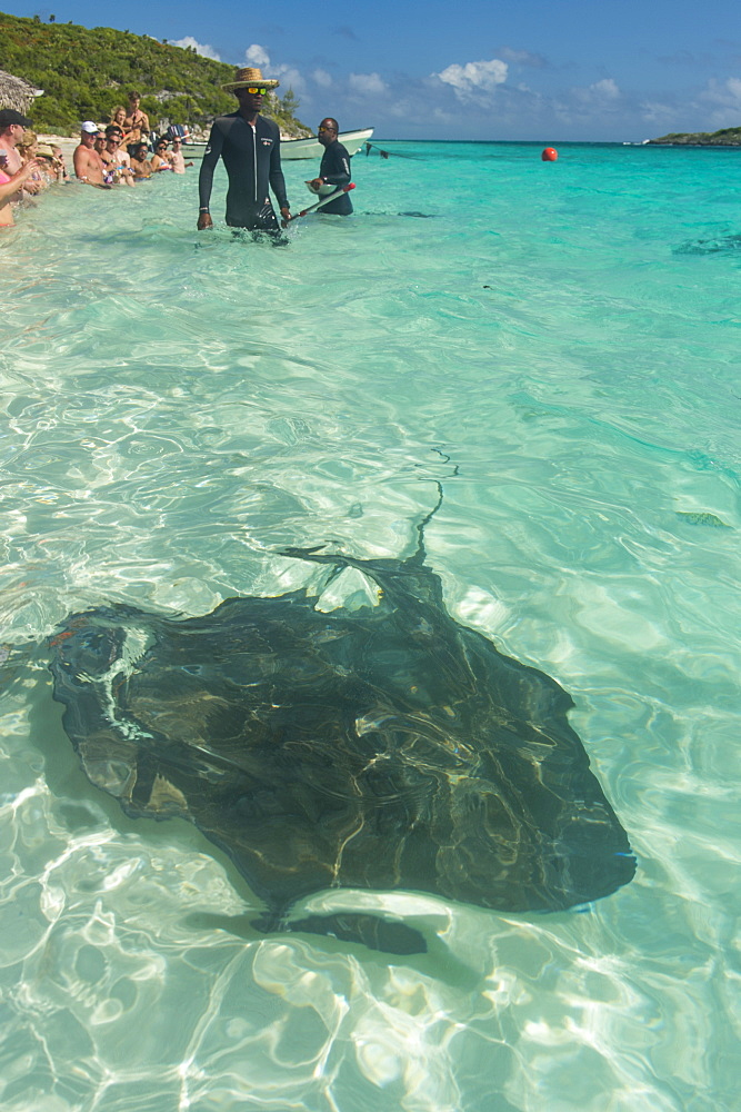 Guides feeding Rays in the turquoise waters of the Exumas, Bahamas, West Indies, Caribbean, Central America