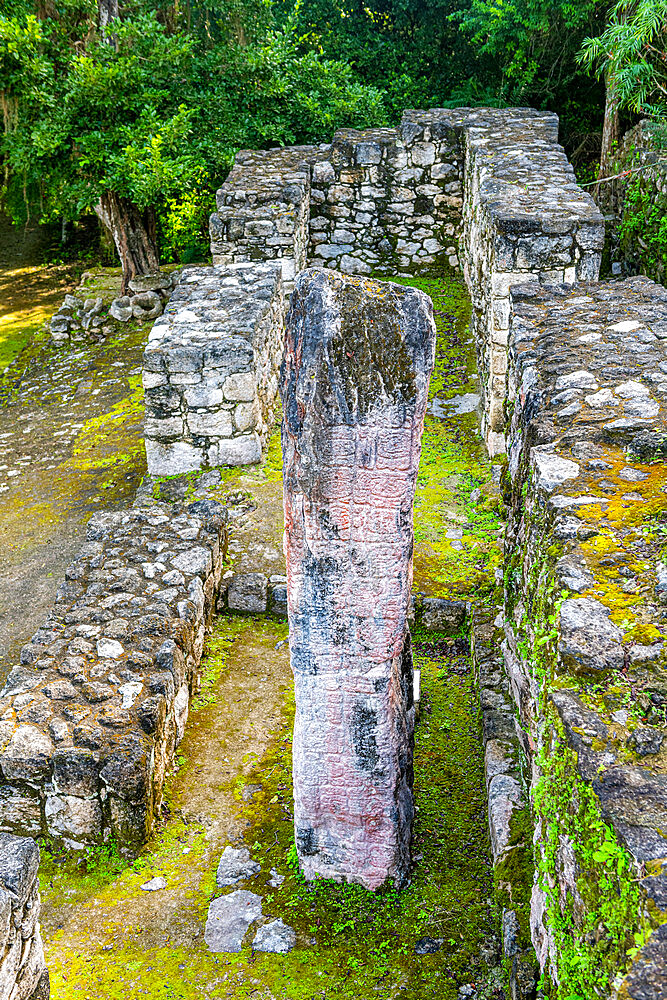 Unesco world heritage site Calakmul, Campeche, Mexico - 1184-5344