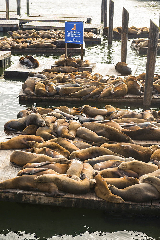 Seals at Pier 39 San Francisco, California, United States