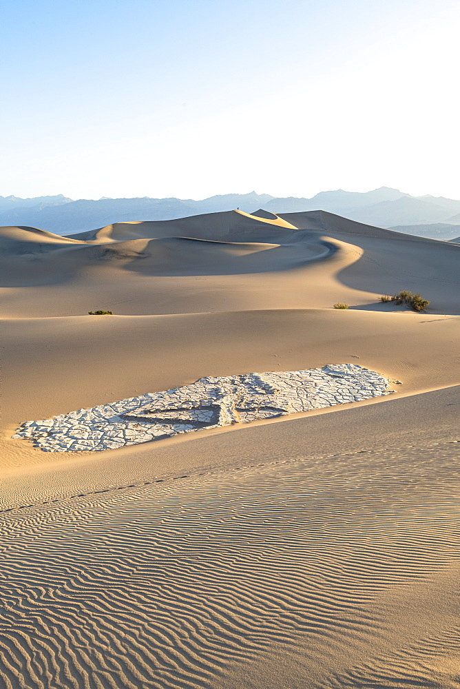 Mesquite flat sand dunes in Death Valley National Park, California, United States of America, North America - 1186-1131