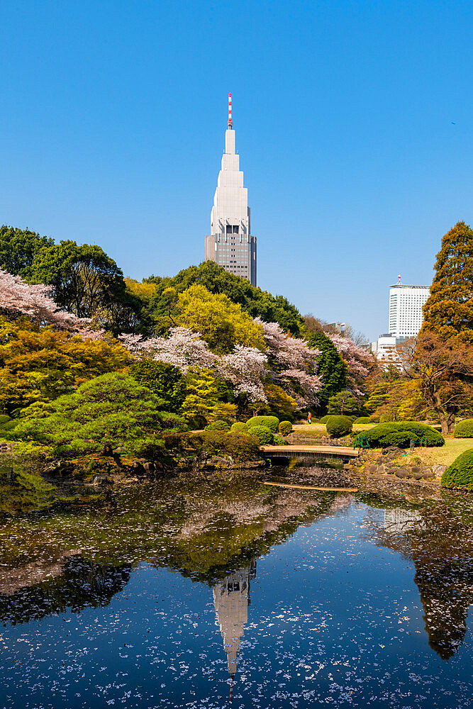 Shinjuku Gyoen and Yoyogi Building during cherry blossom. - 1186-797