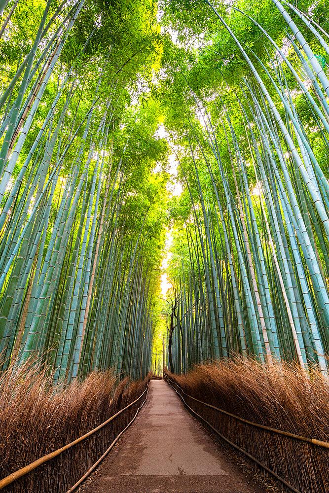 Arashiyama Bamboo Grove Kyoto, Japan, Asia - 1186-822