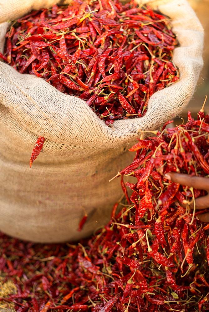 Dried chillies, Sri Lanka, Asia
