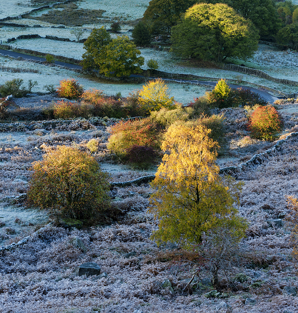 Frost covered trees and fields in autumn, Peak District National Park, Derbyshire, England, United Kingdom, Europe