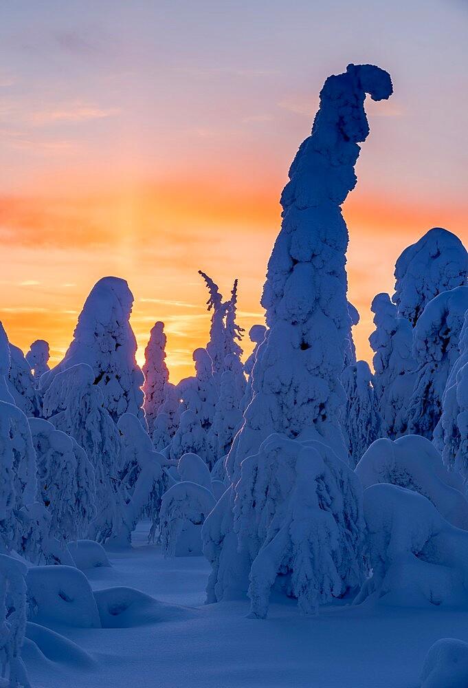 Snow covered winter landscape at sunset, tykky, Kuntivaara Fell, Kuusamo, Finland. - 1200-386