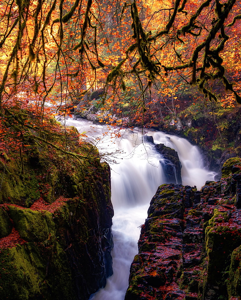 Autumn at the Hermitage, Dunkeld, Perthshire, Scotland, United Kingdom, Europe