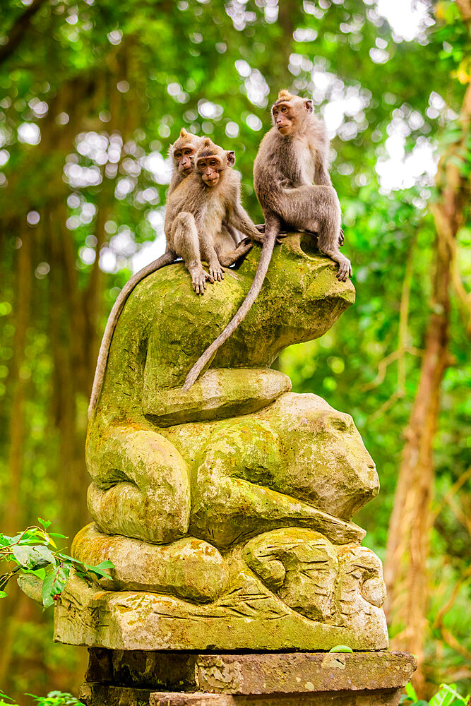 Here's some monkey's at the Sacred Monkey Forest Ubud.