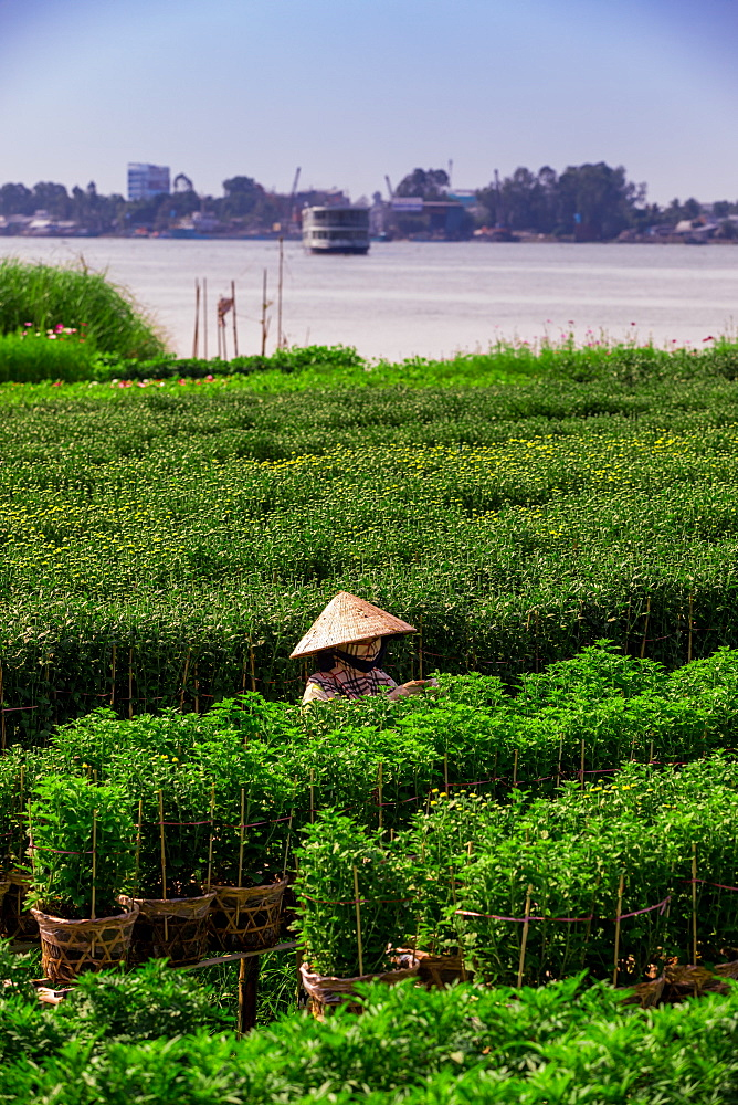 Village farmers in the Mekong Delta away from the intense city life of Saigon