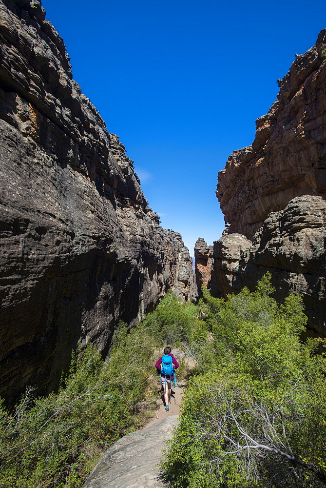 Trekking in the Cederberg mountains, Western Cape, South Africa, Africa