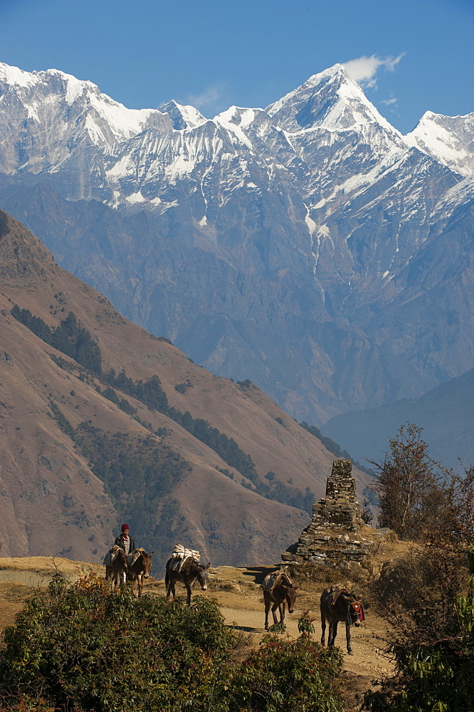 Horses carrying supplies in and out of the Manaslu region make their way home, with views of Ganesh Himal in the distance in Nep