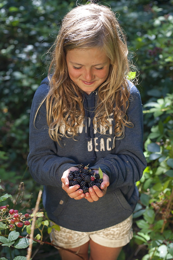 A little girl forages for blackberries in Cornwall in England