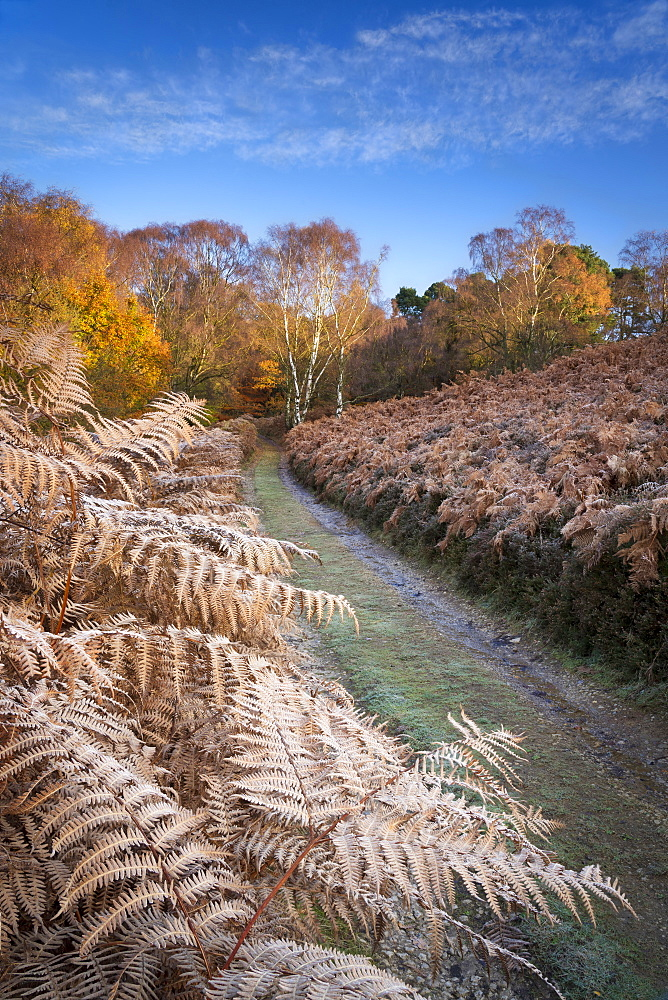 Autumn sunlight and hoar frost on trees and woodland at Birch Hagg Wodd in Farndale, The North Yorkshire Moors, Yorkshire, England, United Kingdom, Europe