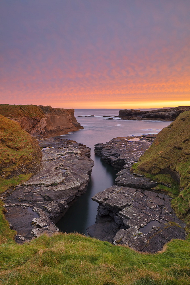Ross, Loop Head, County Clare, Munster, Republic of Ireland, Europe - 1240-281