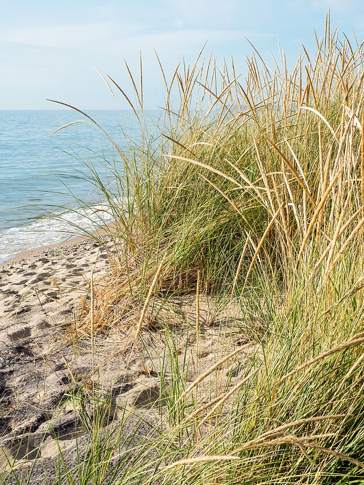 Sea grasses on a Lake Michigan beach, Sleeping Bear Dunes National Park, Glen Arbor, Michigan