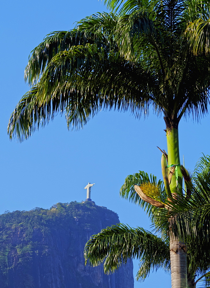 Corcovado and Christ statue viewed through the palm trees of the Botanical Garden, Zona Sul, Rio de Janeiro, Brazil, South America