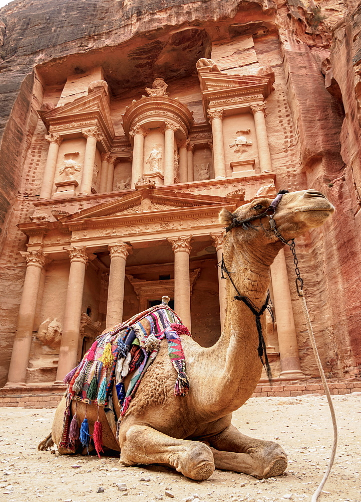 Camel in front of The Treasury (Al-Khazneh), Petra, UNESCO World Heritage Site, Ma'an Governorate, Jordan, Middle East