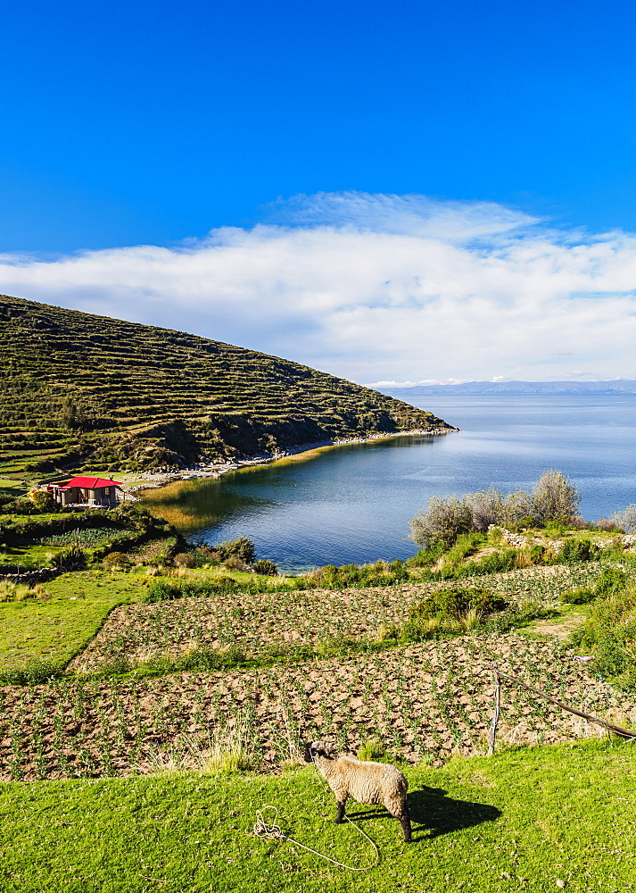 Island of the Sun, Titicaca Lake, La Paz Department, Bolivia, South America