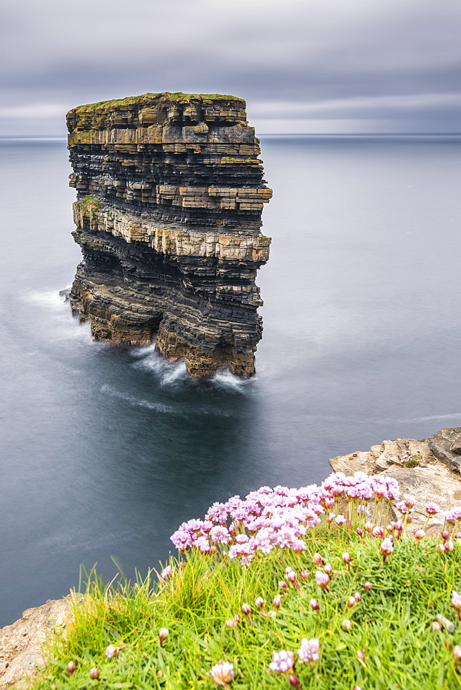 Downpatrick Head with flowers in the foreground. Ballycastle, Co. Mayo, Connacht province, Ireland.