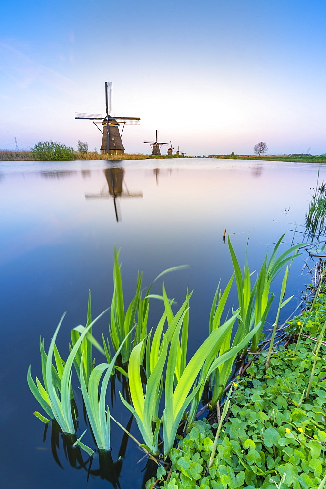 Windmills on the canal and grass in the foreground, Kinderdijk, UNESCO World Heritage Site, Molenwaard municipality, South Holland province, Netherlands, Europe
