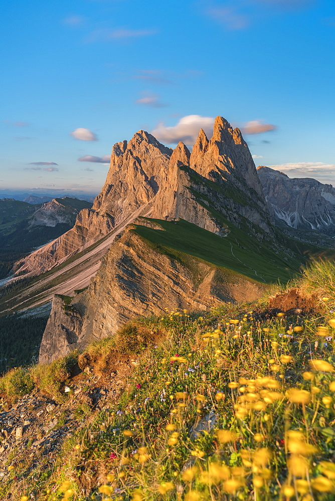 Globeflowers by Seceda mountain in Ortisei, Italy, Europe - 1251-447