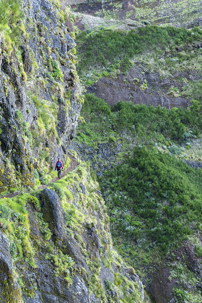 Woman walking on the trail from Pico Ruivo to Pico do Areeiro, Santana municipality, Madeira, Portugal, Europe - 1251-495