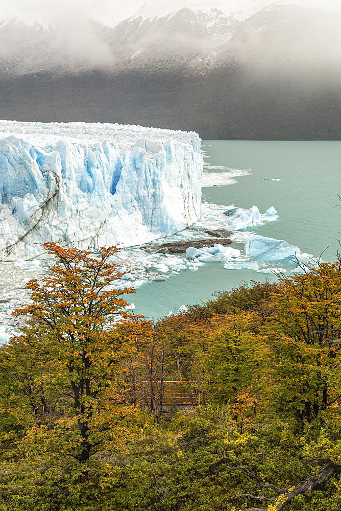 Perito Moreno with trees, Lago Argentino and mountains in autumn, Los Glaciares National Park, UNESCO World Heritage Site, Santa Cruz, Argentina, South America