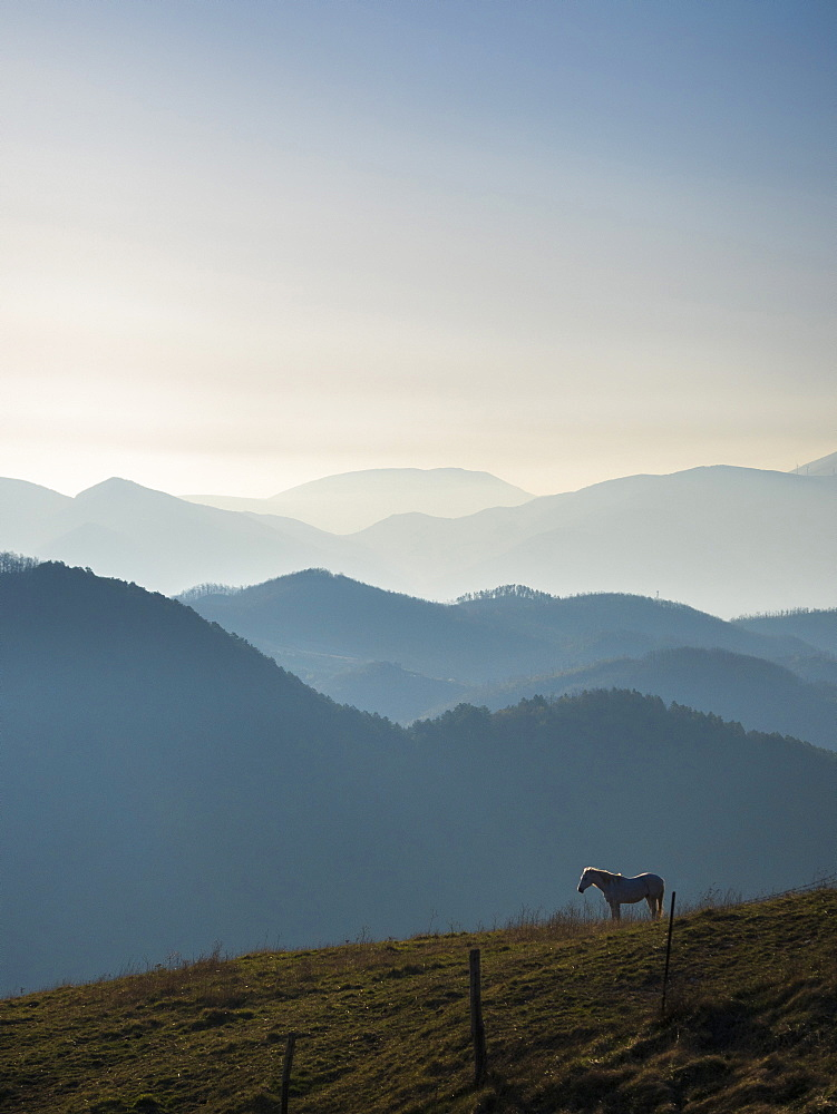 Horse at sunrise, Apennines, Umbria, Italy, Europe