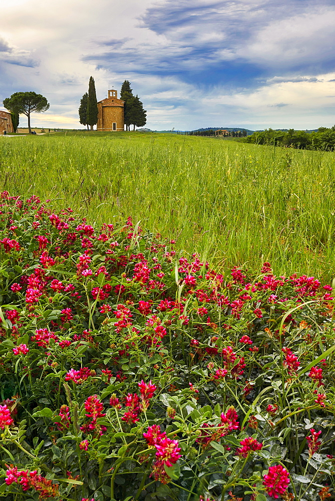 Vitaleta Chapel in spring, Val d'Orcia, UNESCO World Heritage Site, Tuscany, Italy, Europe - 1264-288