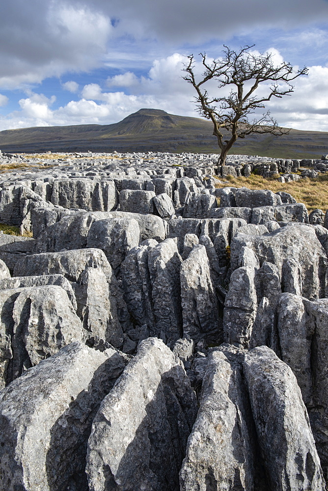 View towards Ingleborough Hill, one of the famous Yorkshire Three Peaks from Twisleton Scar, above Ingleton, North Yorkshire, Yorkshire, England, United Kingdom, Europe
